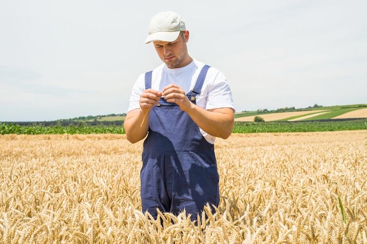 giovane-giovani-agricoltore-campo-grano-by-dusan-kostic-fotolia-750
